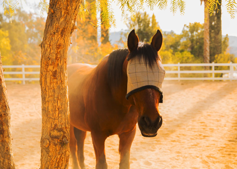 HorseLight_10in.jpg