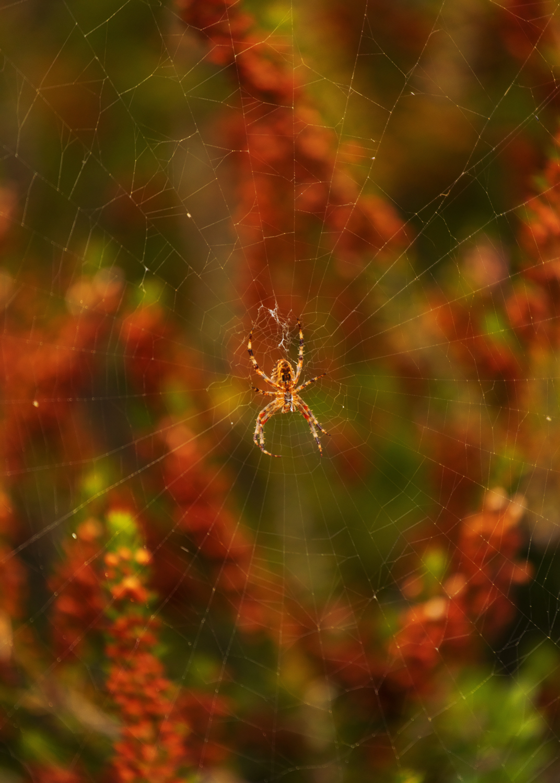 spiderweb_web.jpg