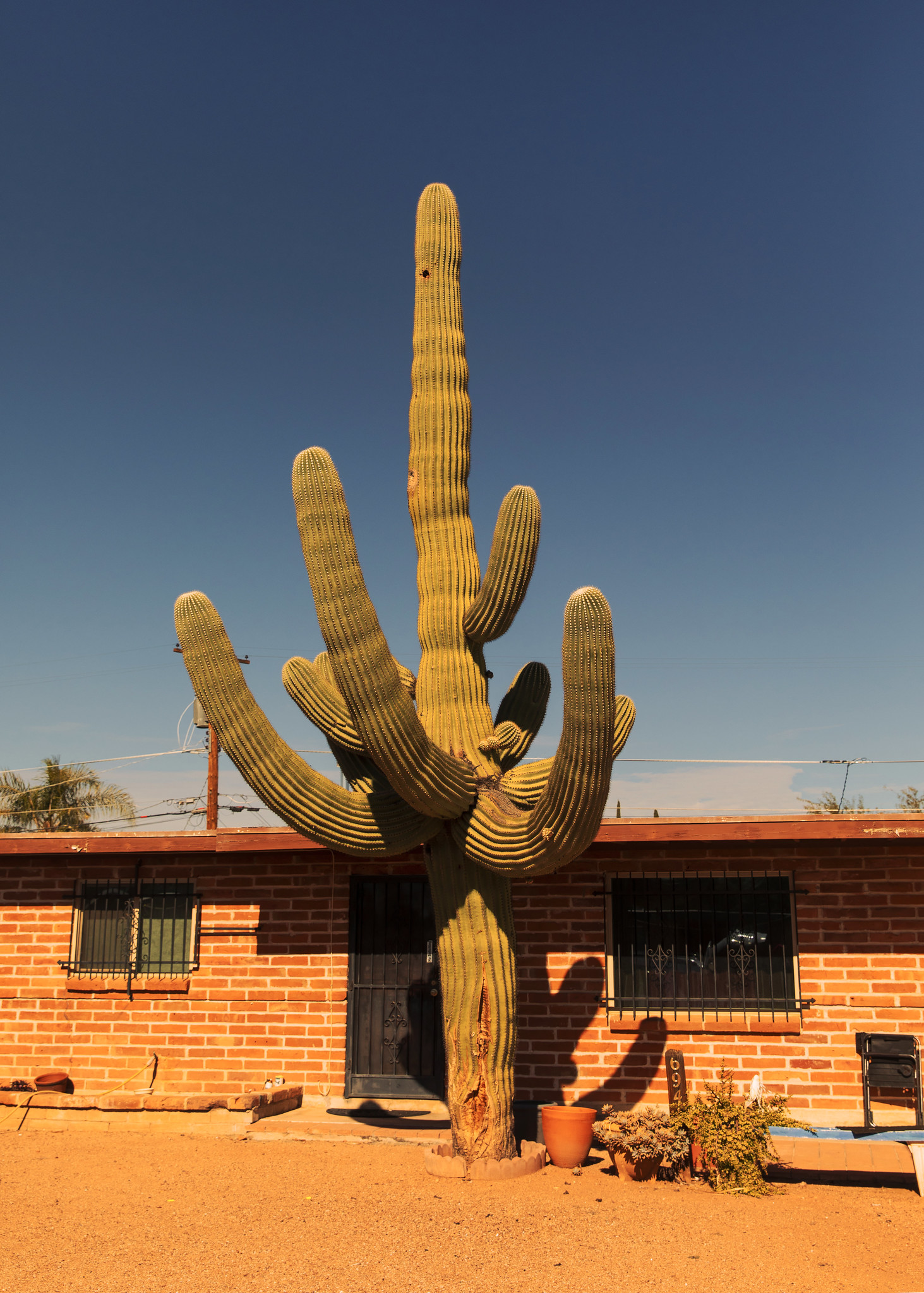CactusHouse.jpg
