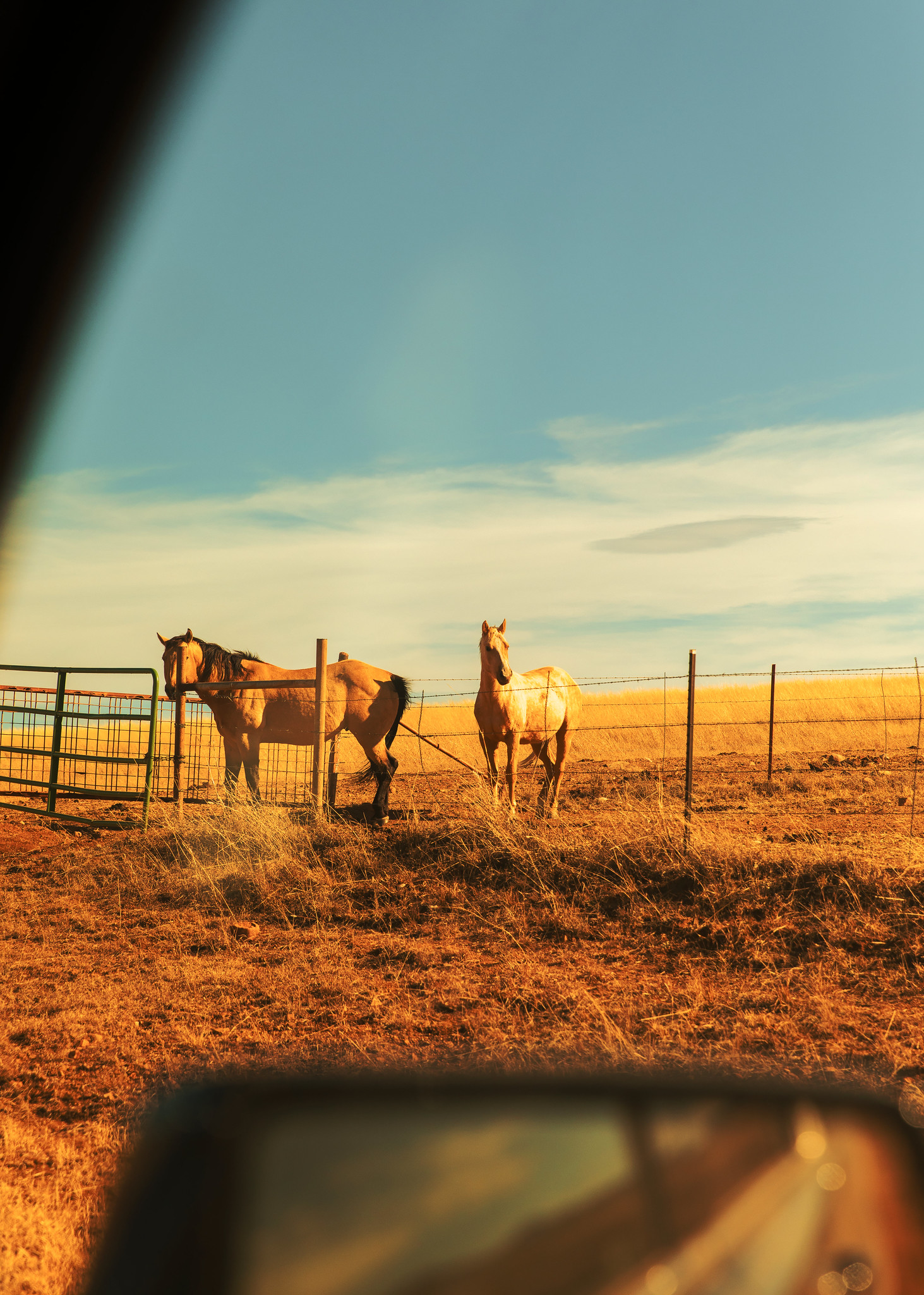HorseCar.jpg