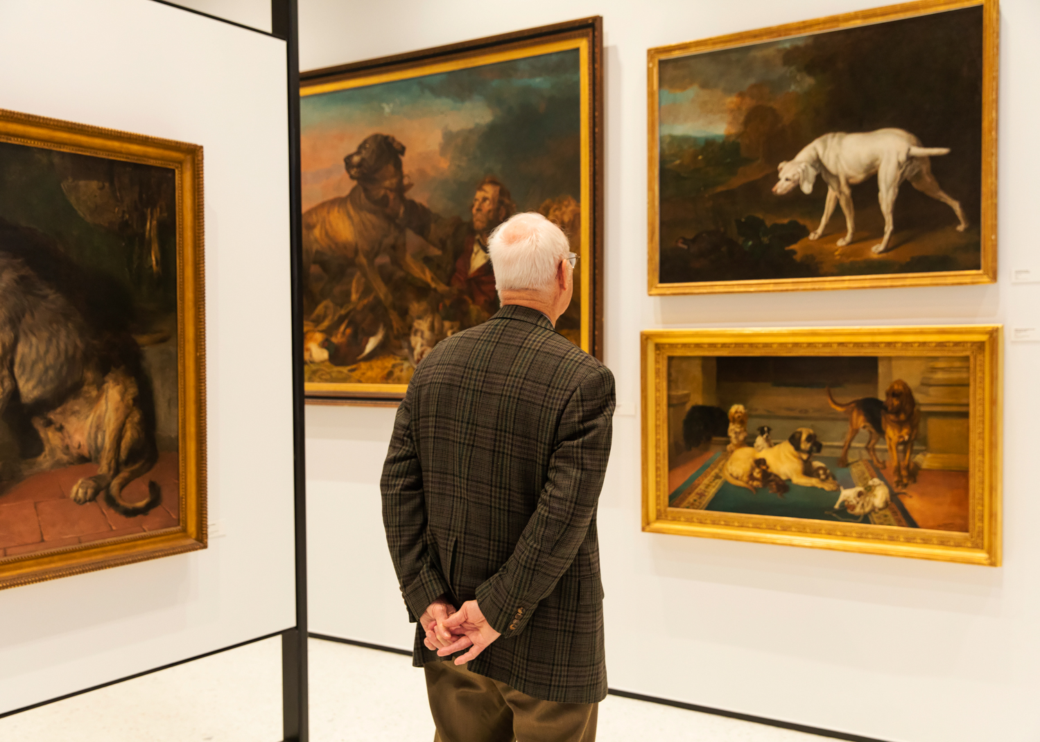 AKC MUSEUM OF THE DOG   THE NEW YORK TIMES