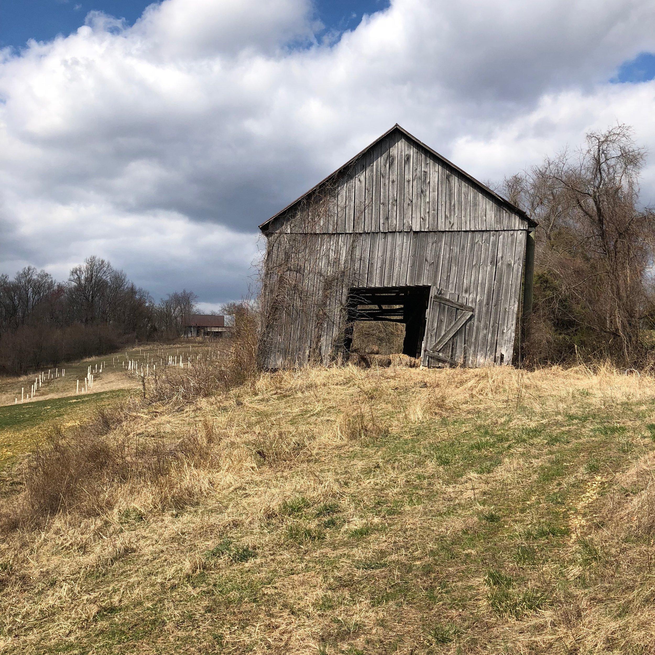 Photo looking down road at both barns.