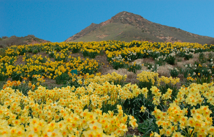 University Of Utah American Rose Trials For Sustainability