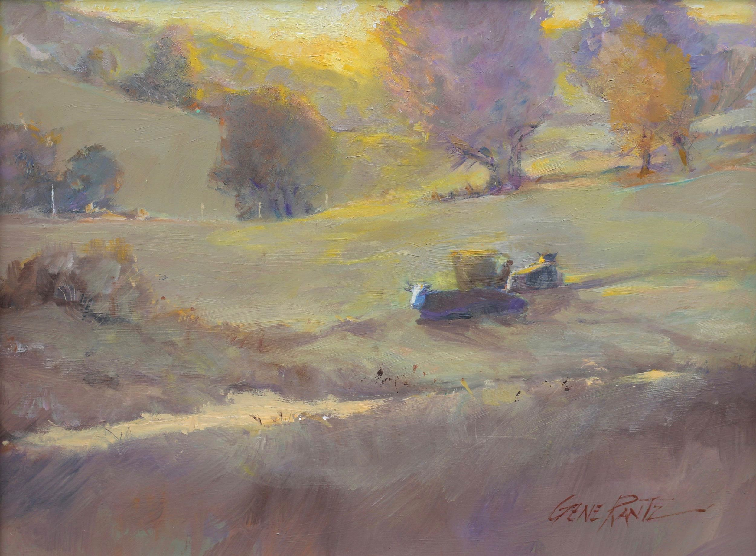 Resting Cattle, Evening Sun 12 x 16 Oil on Masonite