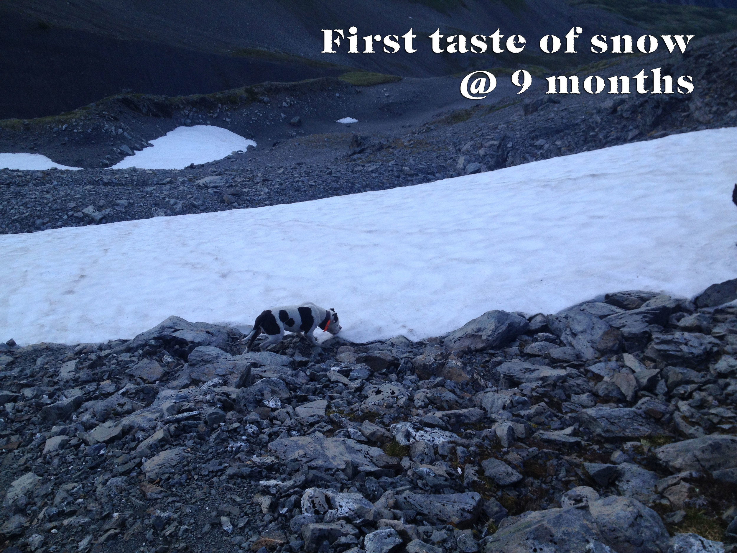 #11---first-taste-of-snow.jpg