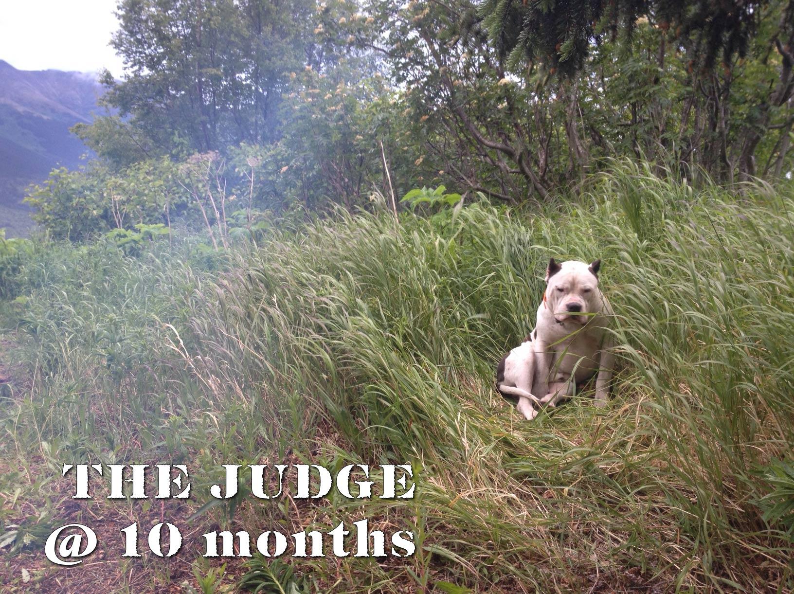 Judge-10-months.jpg