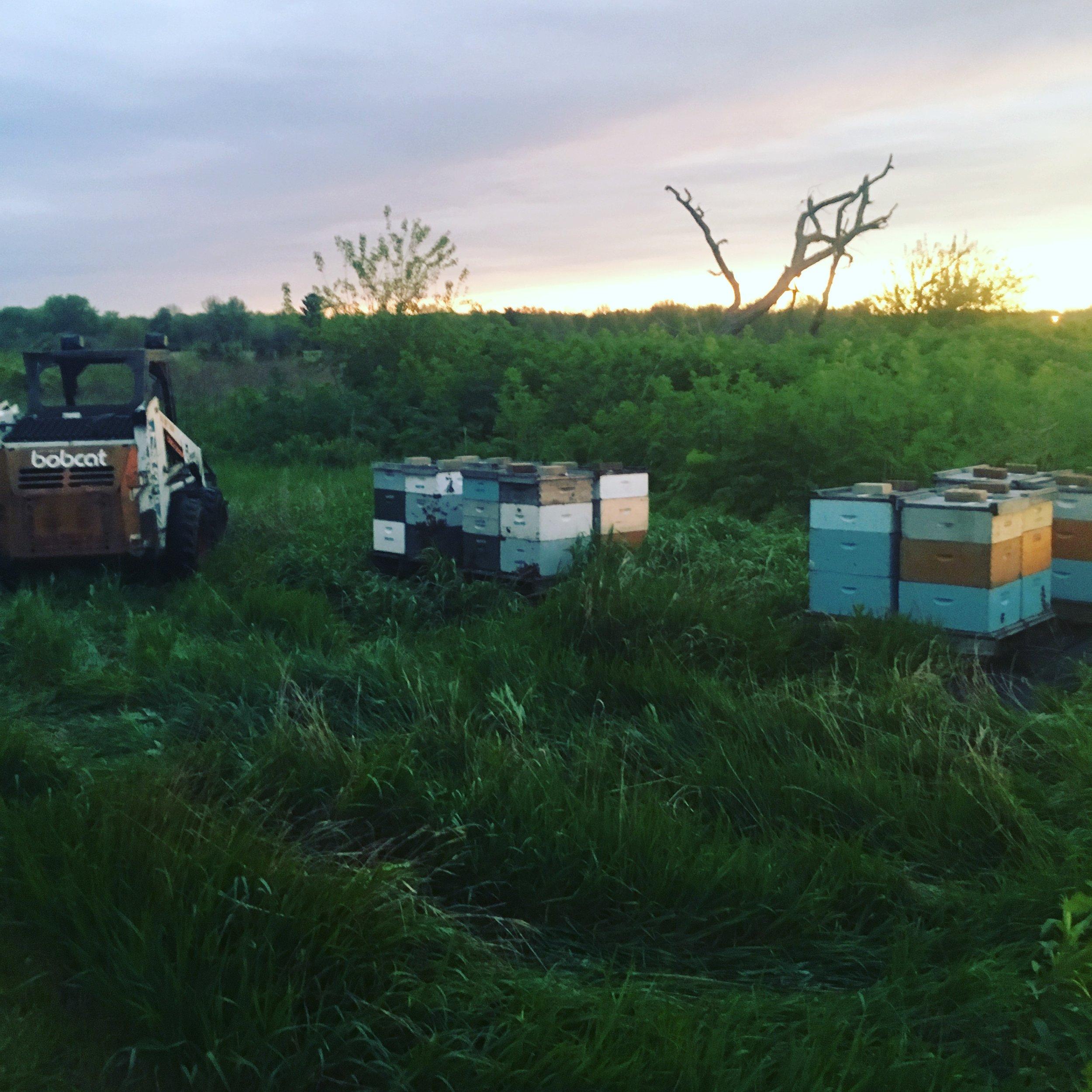 Good morning bees!