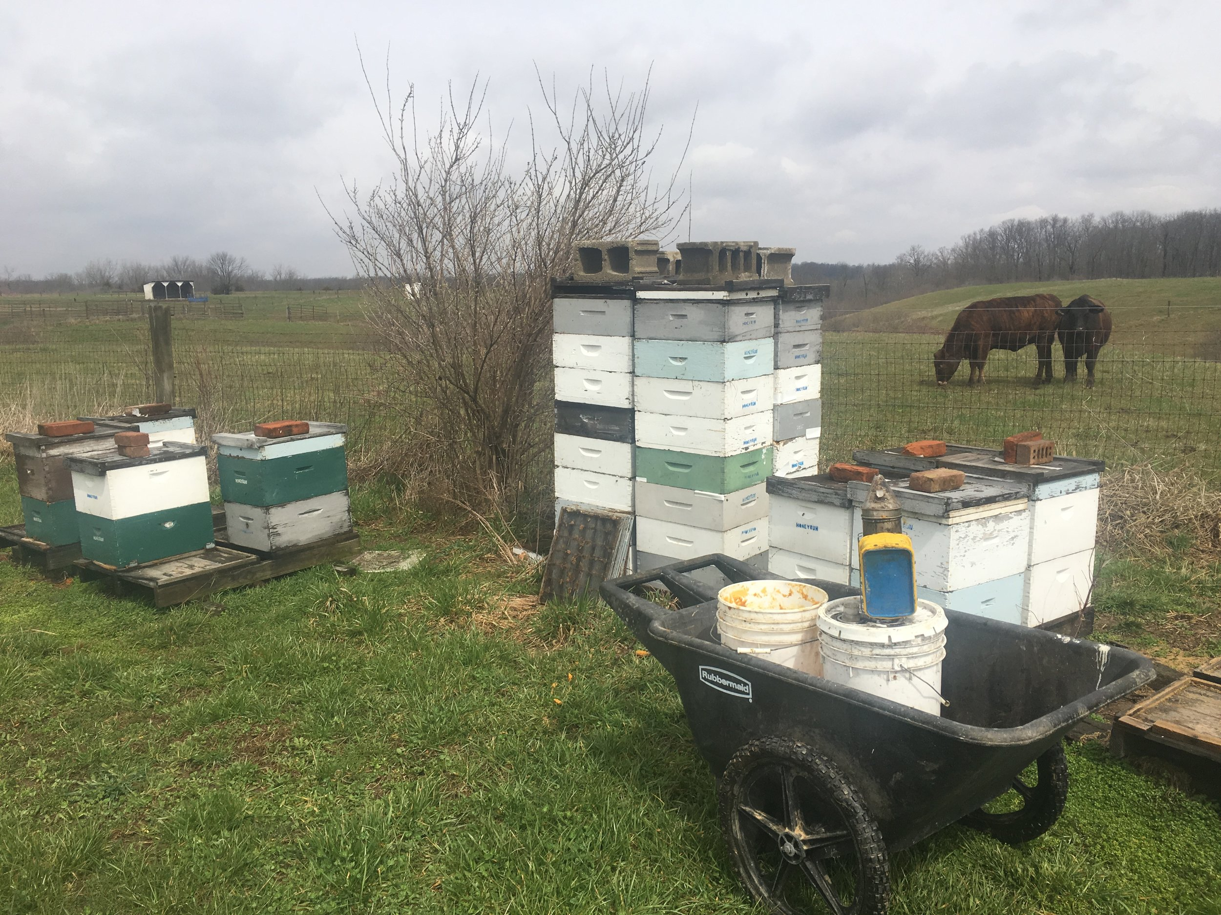 The  bees , not the cows.