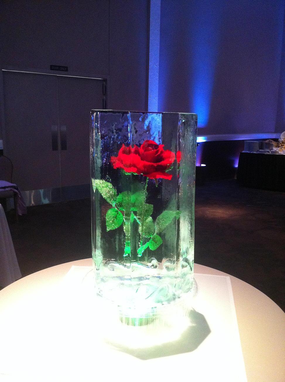 Frozen rose in ice