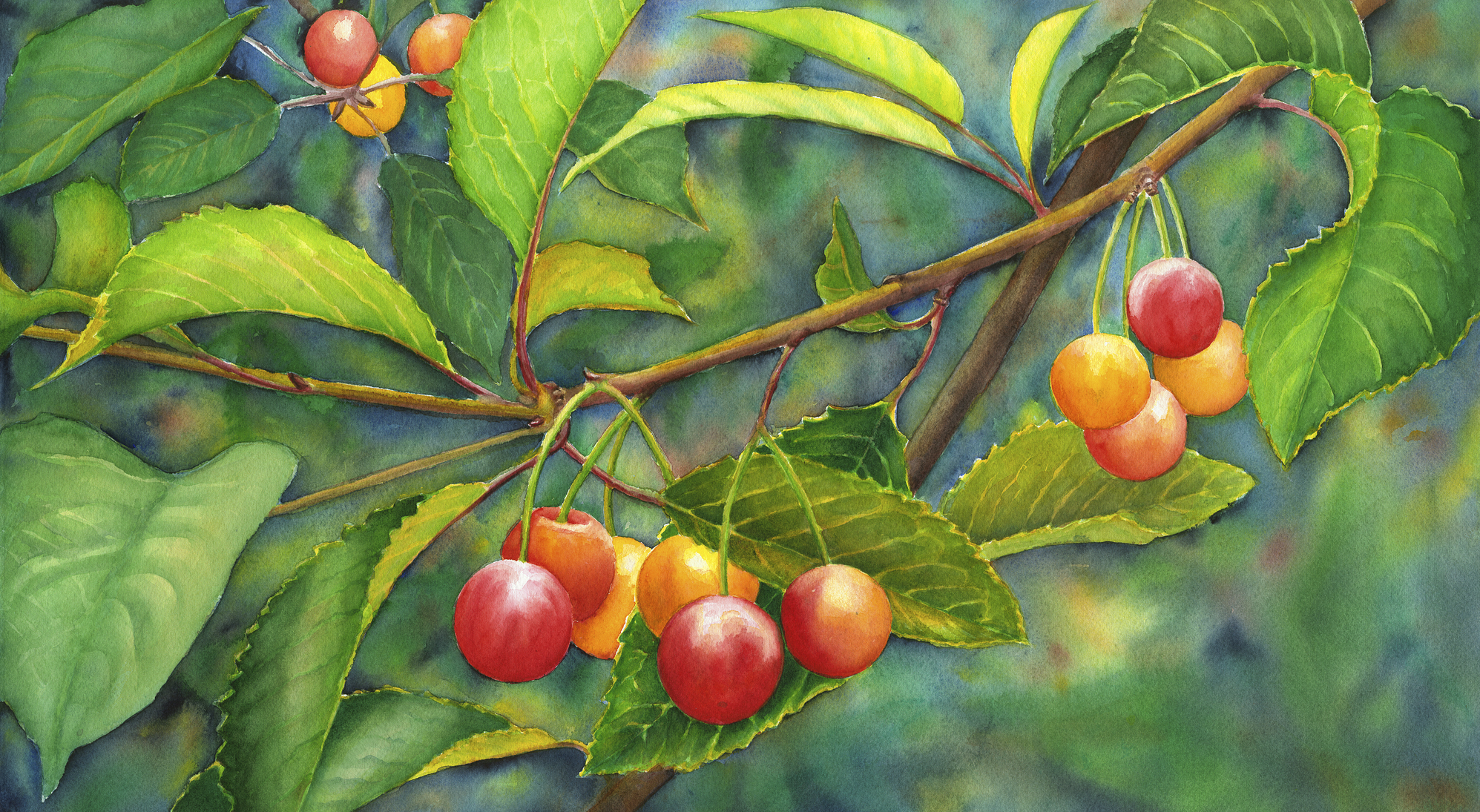 "Cherries 15"" x 22"" Sold; Giclée prints available"