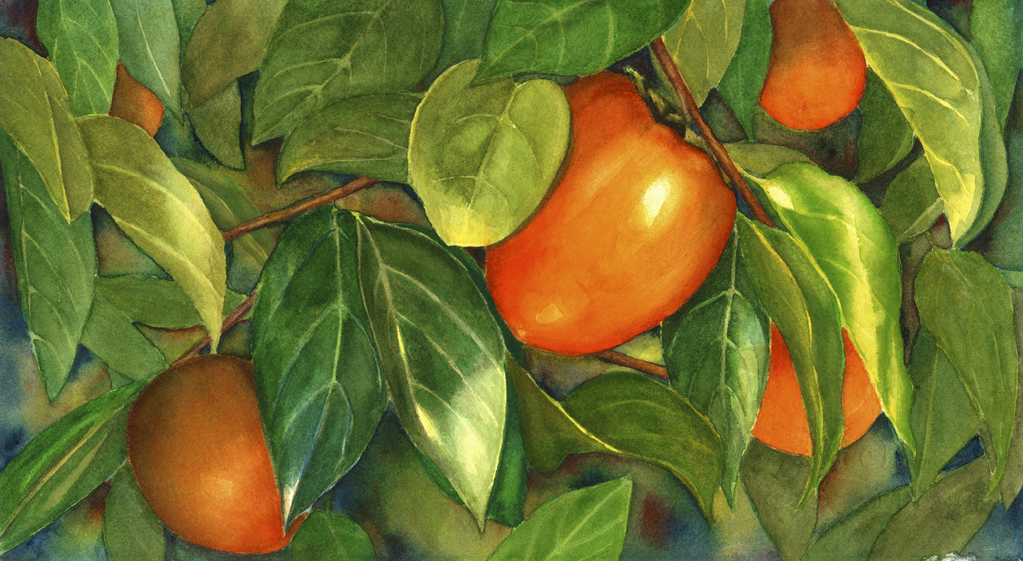 "Persimmons 8"" x 15"" Sold; Giclée prints available"