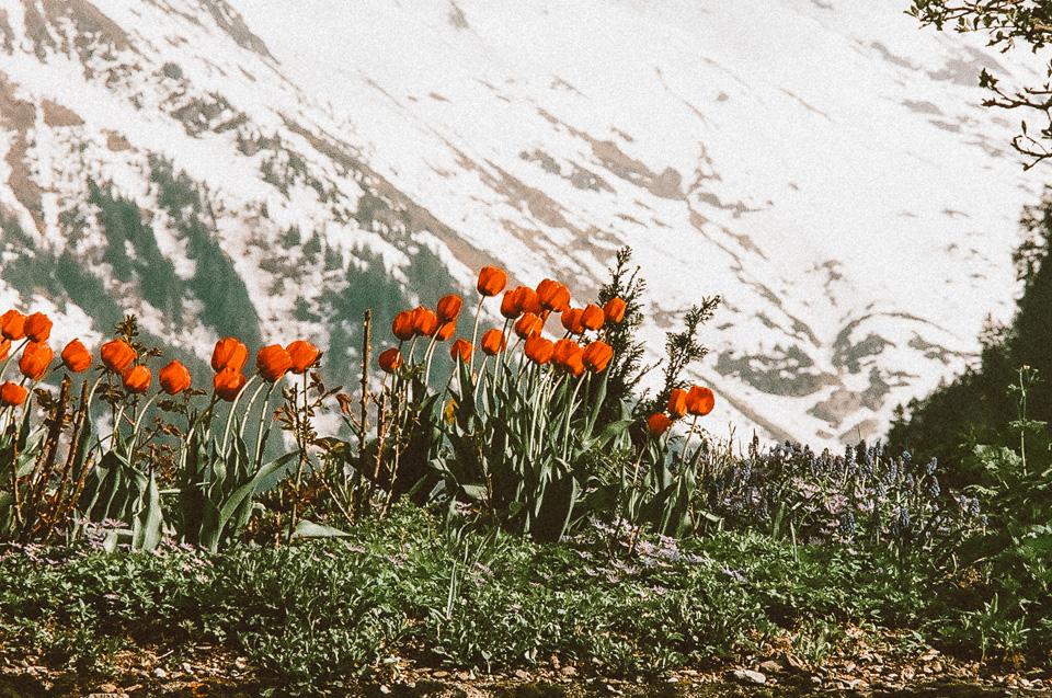 SwitzerlandBlog (59 of 117).jpg
