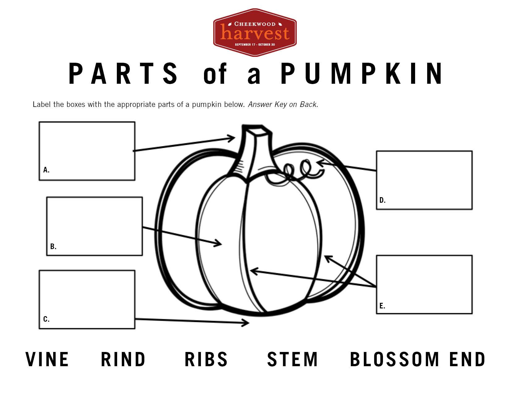 Pumpkin.Worksheet.jpg