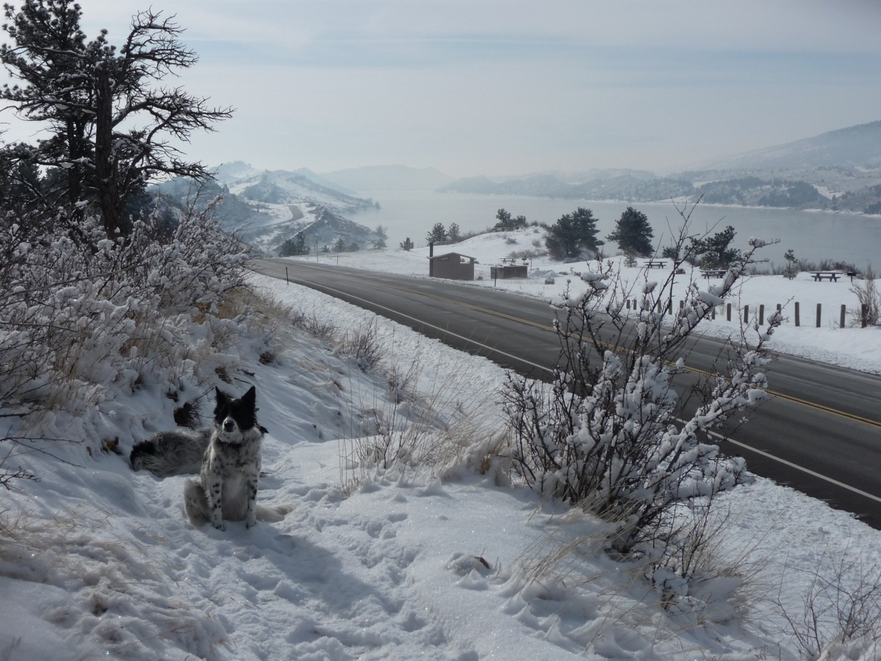 Dr. Maguire's collies Ella and Murphy enjoying a fresh snow day in Colorado