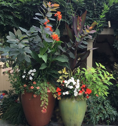 Container Plantings in Bellevue WA