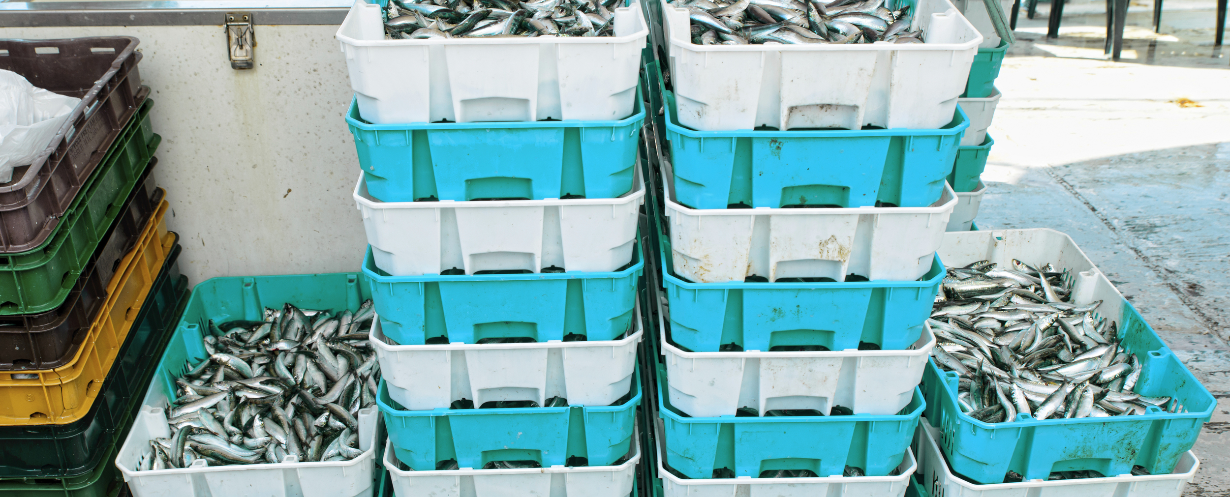 stock-photo-47699822-fresh-fish-in-crates.jpg