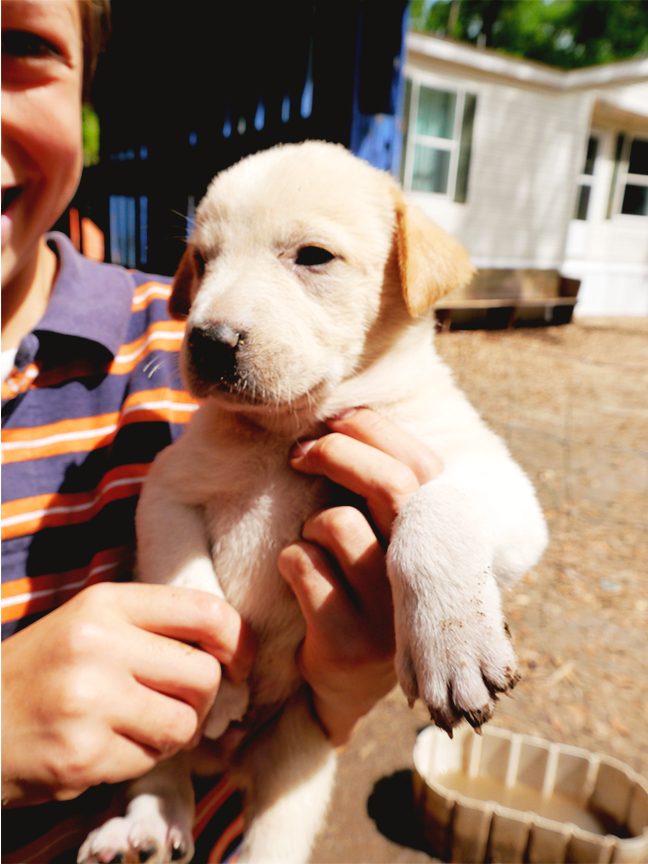 Easter2015_puppies4res72.jpg