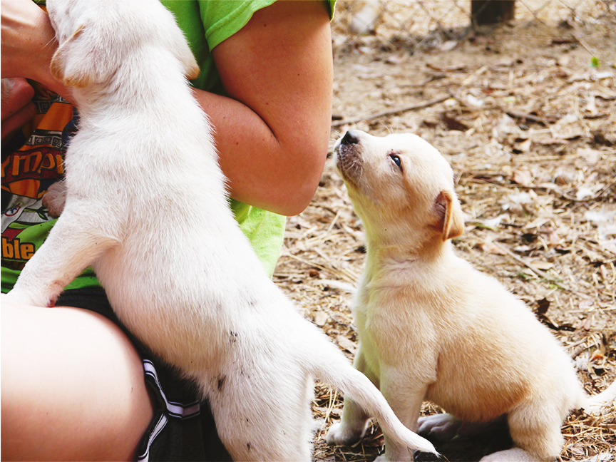 Easter2015_puppies7res72.jpg