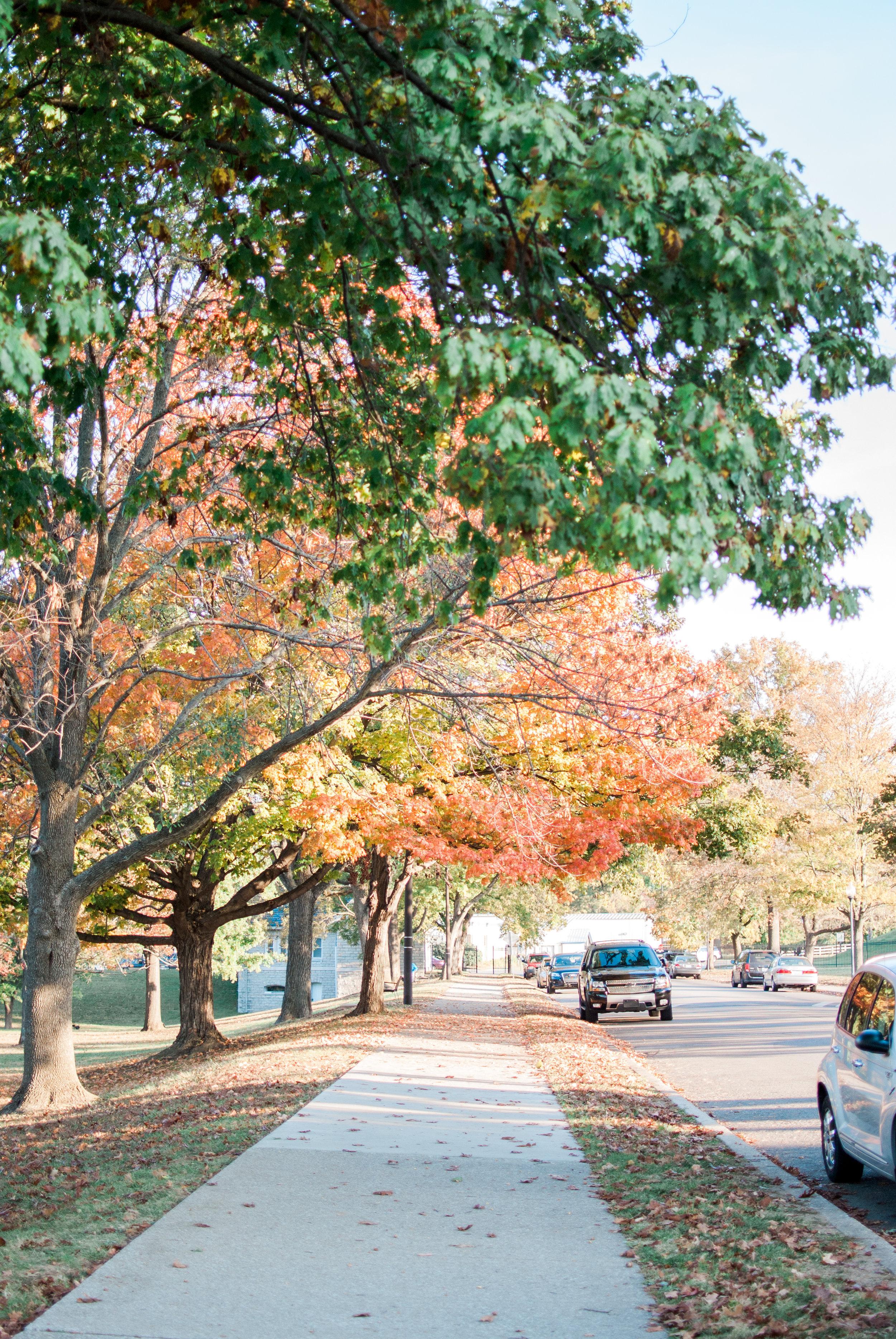 Fall Blog-1.jpg