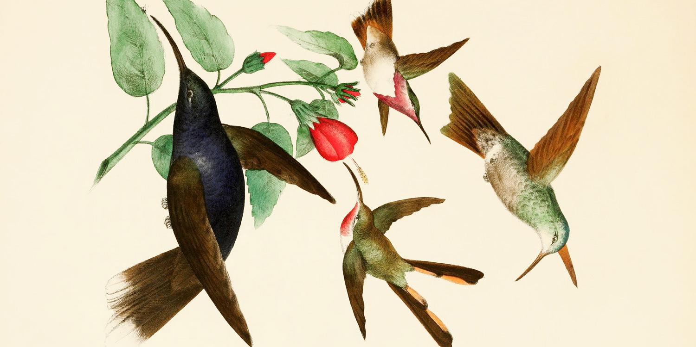 rafael-montes-de-oca-1875-hummingbird-pollinating-1500x750.jpg