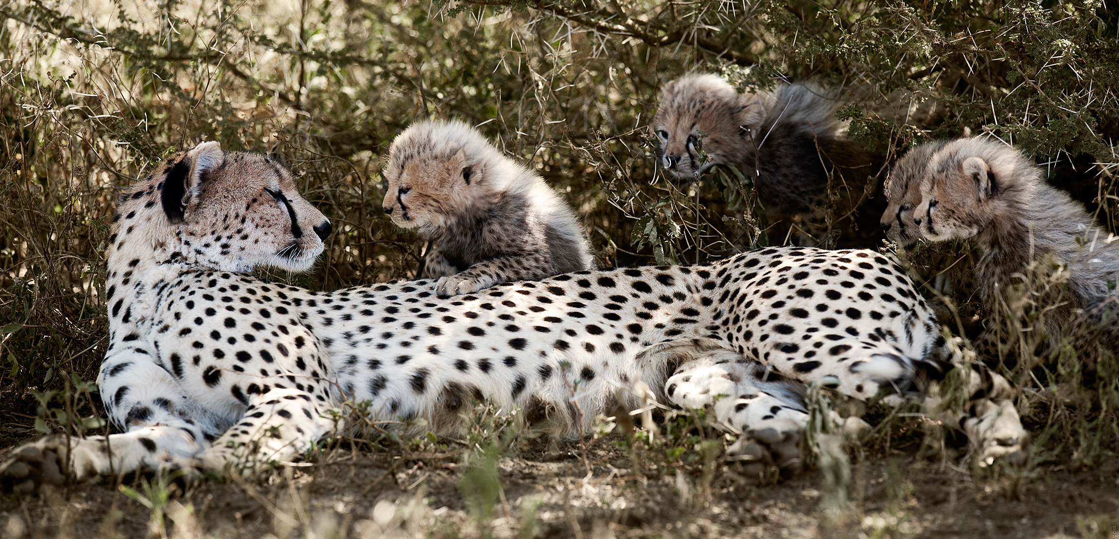 2012 Tanzania - D3X0138b - WEBSITE.jpg