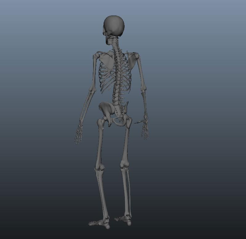 skeleton_02.jpg