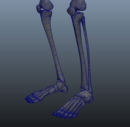 skeleton_05.jpg