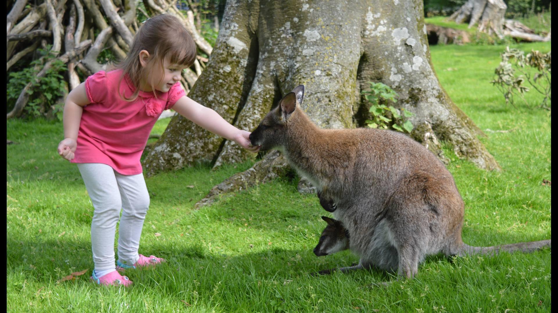 Wallaby Walkthrough Manor Wildlife Park