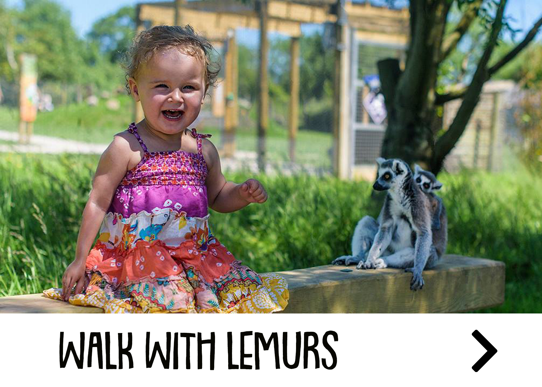 Walk with lemurs