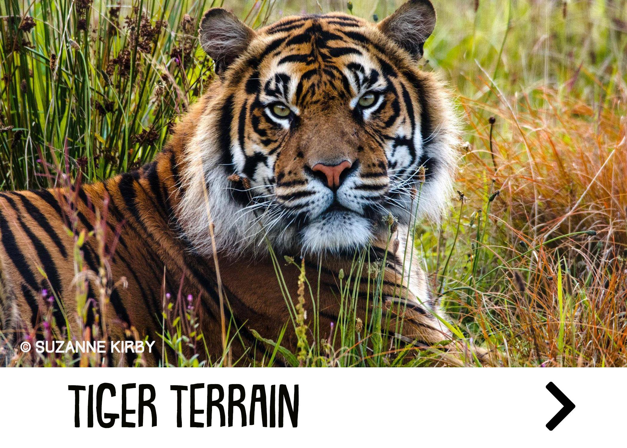 tiger_attraction.jpg