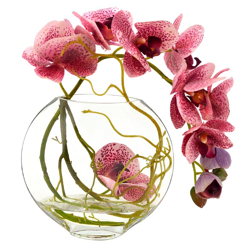 Fuchsia+Orchid+with+Vine+in+Water.jpg