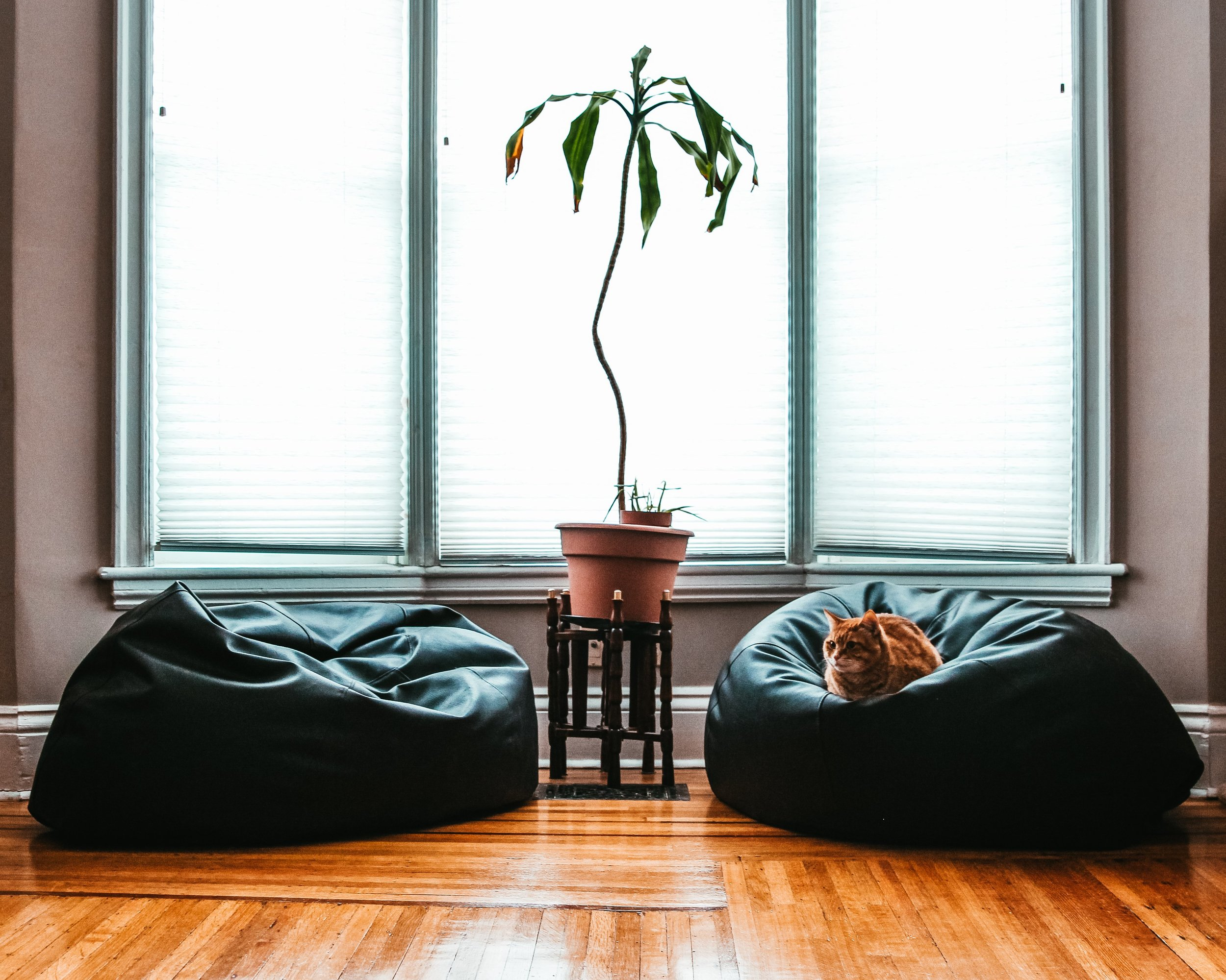 comfortable-living-room-cat_4460x4460.jpg