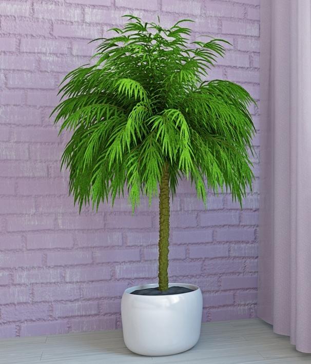 palmtree.jpeg