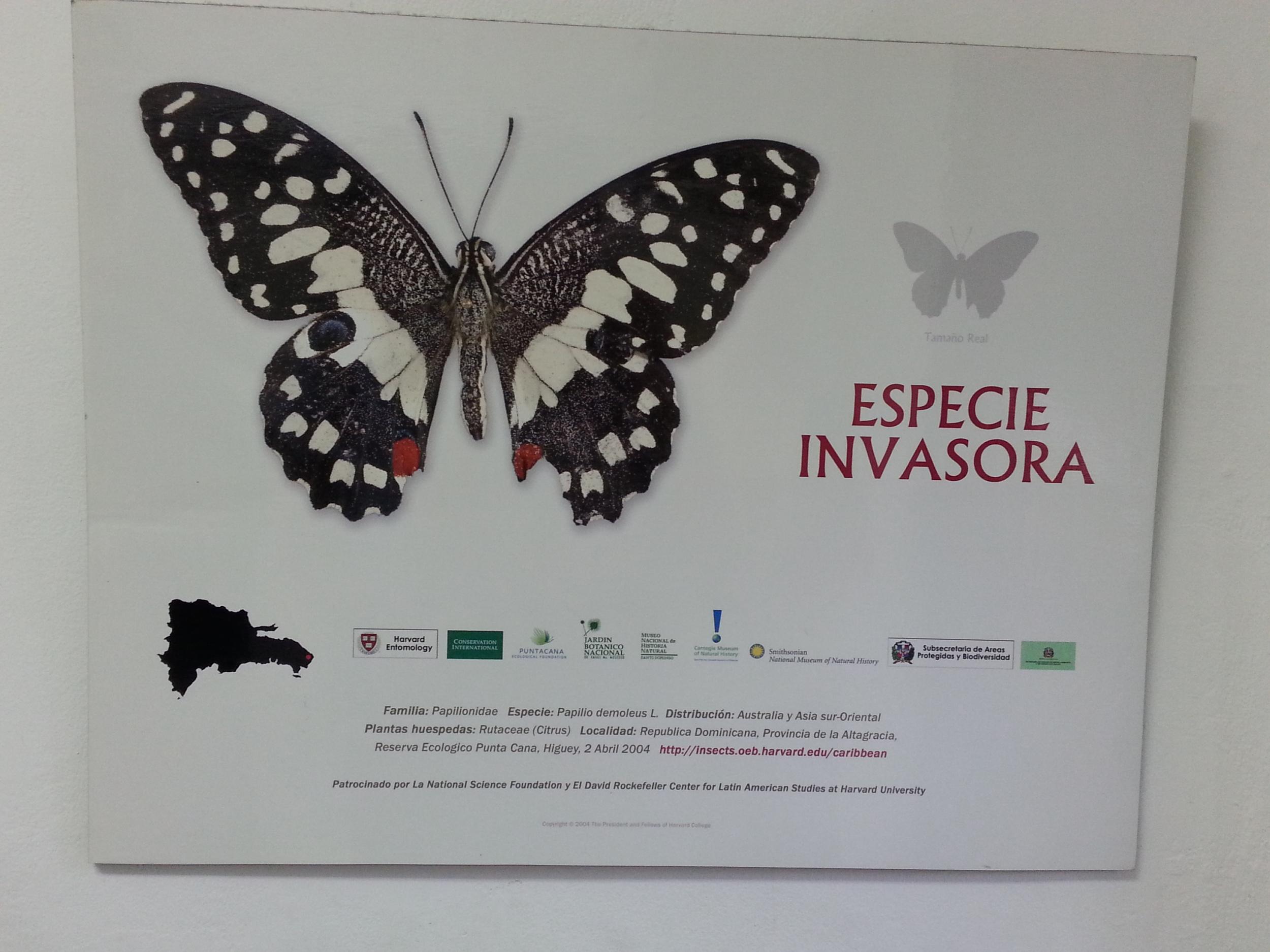 invasivebutterfly.jpg