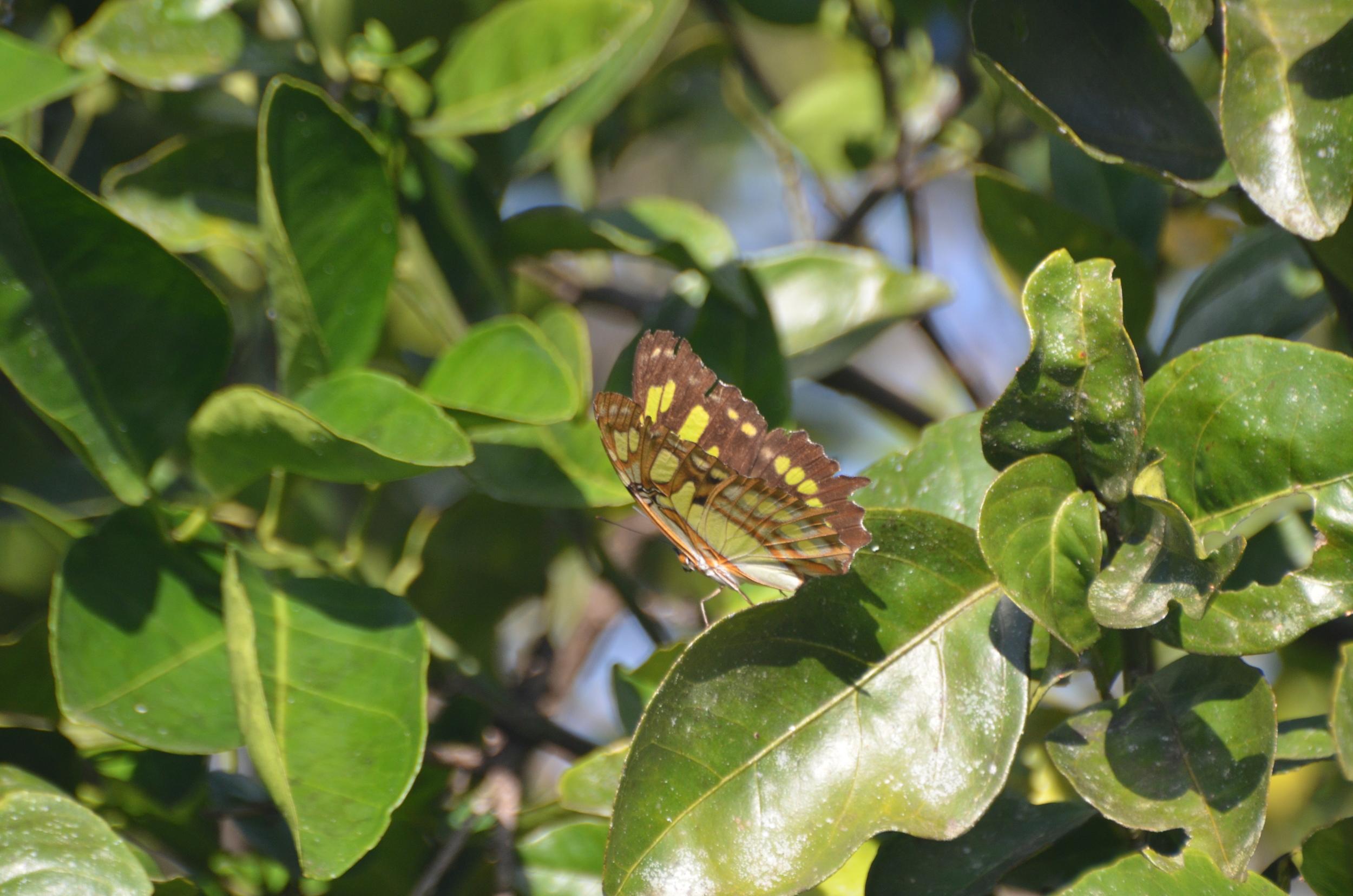 Malachite on tree.JPG