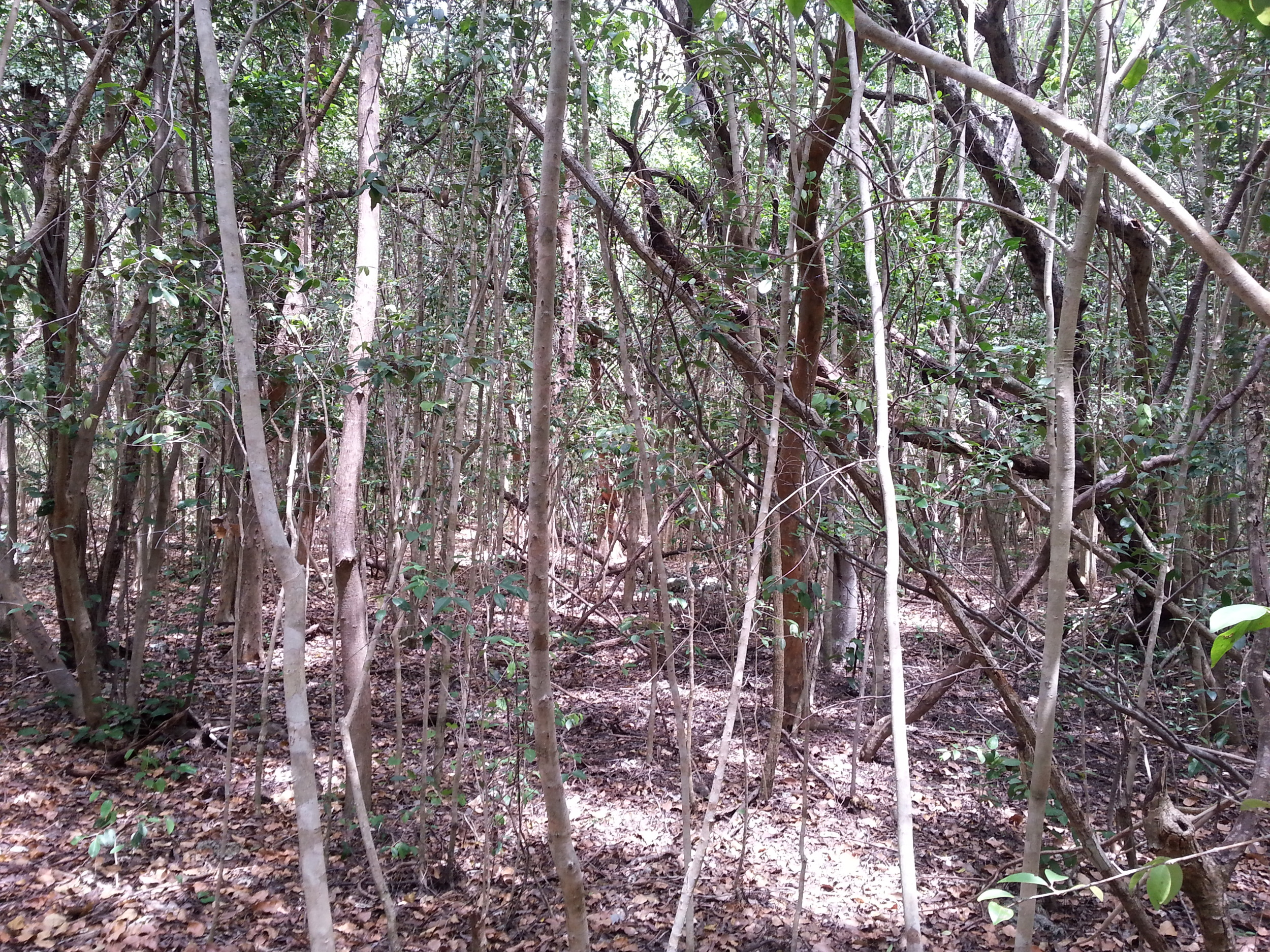 The interior of Elliott Key (subtropical dry forest), many insect species roam here.