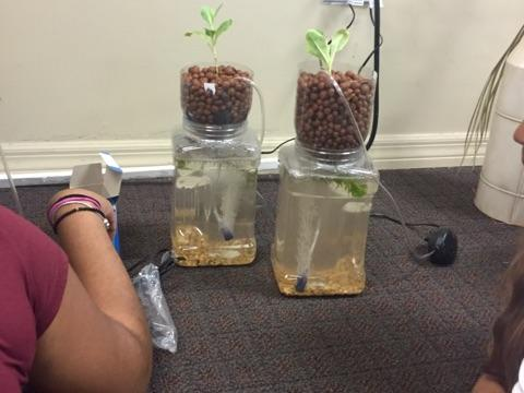 kids watch aquaponic system.jpeg