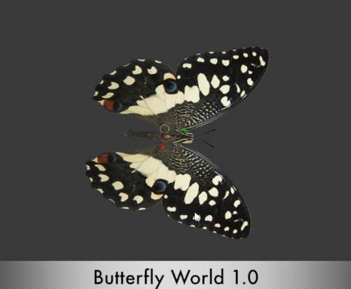 The  lime swallowtail  is one of many butterflies in the game.