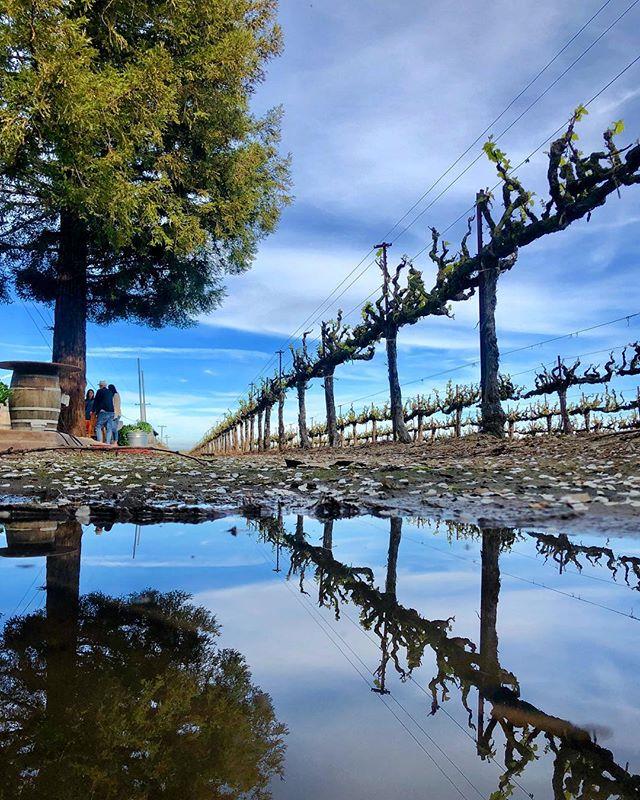 A beautiful Sunday afternoon🥰 @boglevineyards #bogle #boglevineyards #puddlegram