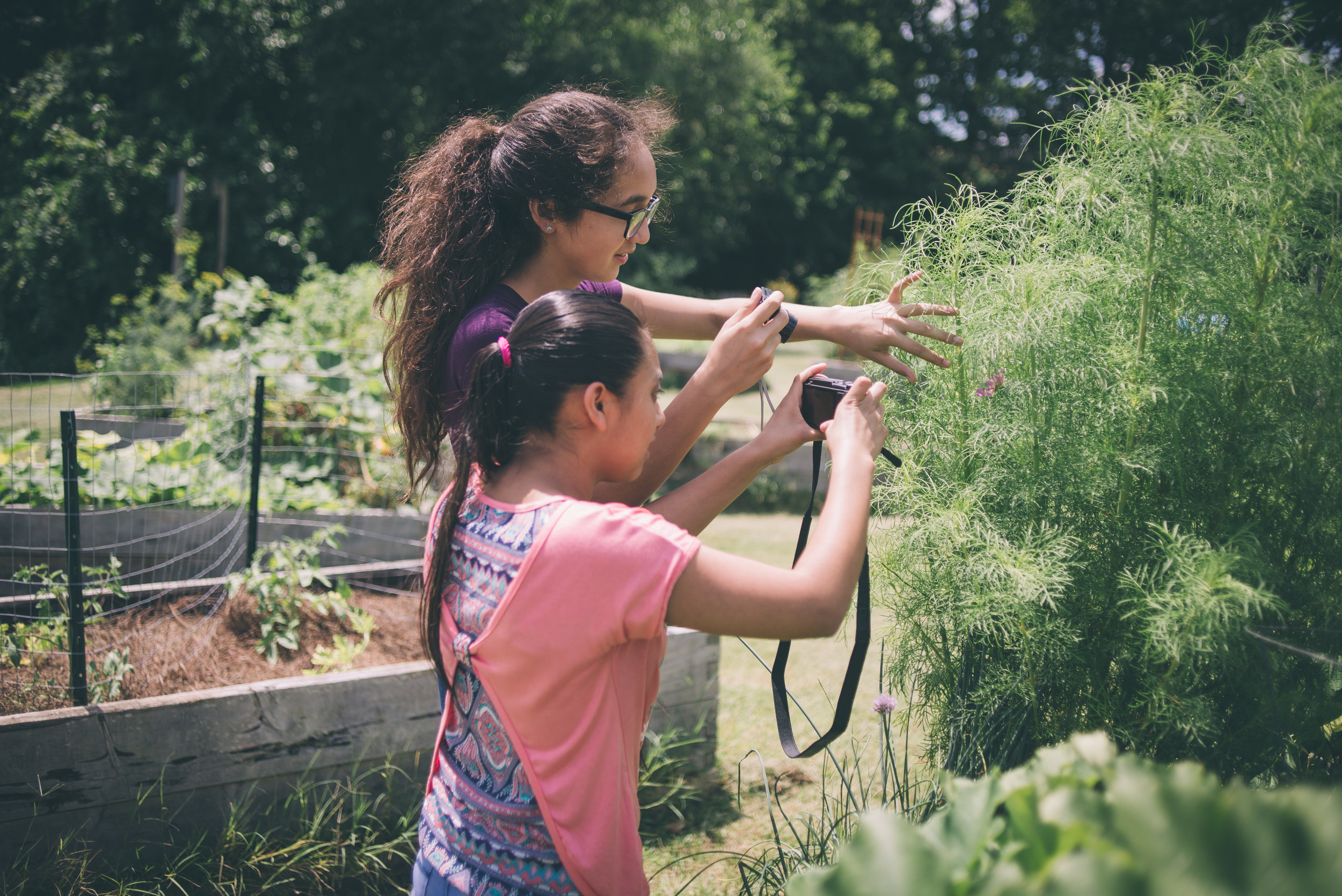 Students learning about composition in the community garden.