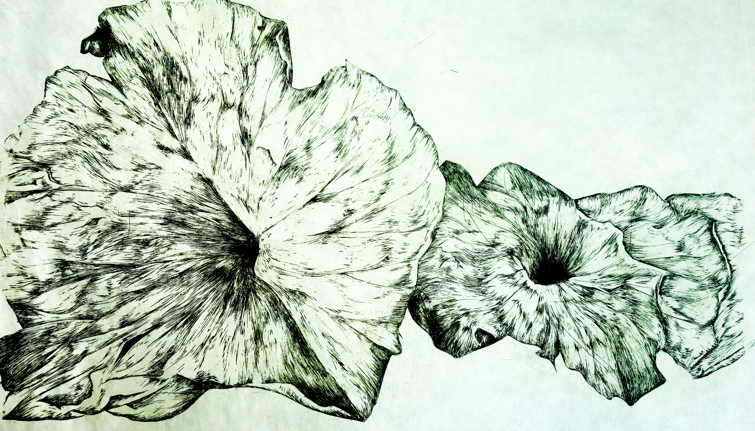 """""""Lily Leaves"""" by Rachel Singel, 12x18in, intaglio on mulberry paper (2016)"""