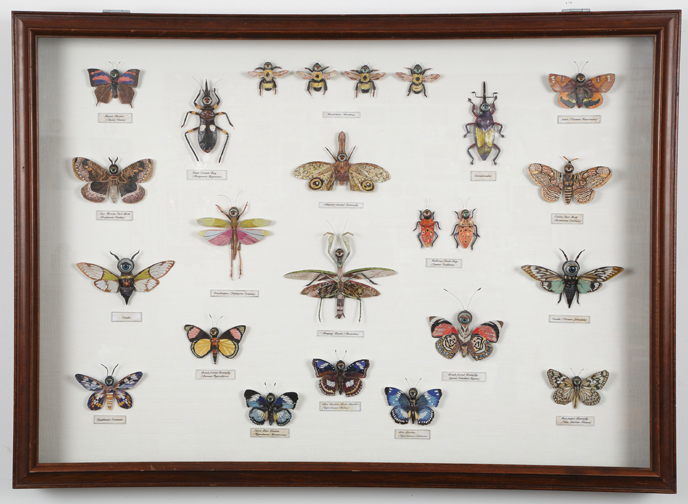 """'Miraculous Discoveries"" by Caroline Waite, 38x27x3in, large display case of hand constructed and collaged insects (sourced from detailed photographs of preserved insects), dolls eyes, card stock, wire, and magazine paper, $5500 