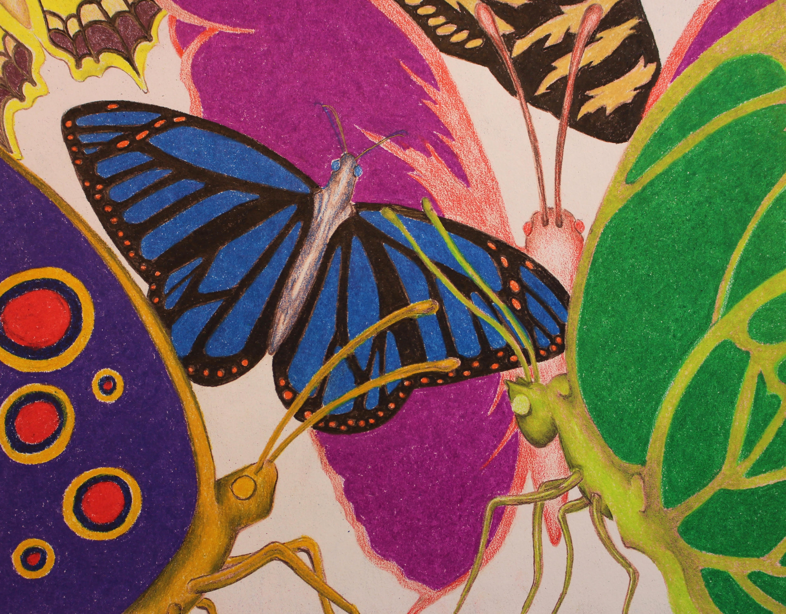 """Butterflies!"" by Mike McCarthy, 8x10in, hand colored print, $65 