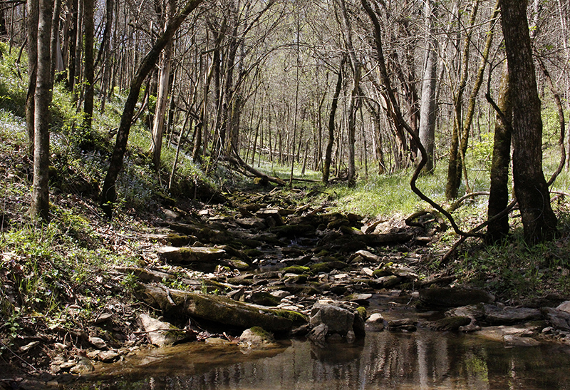 """Hal Bryan's Creek, Franklin County, KY"" by Ed Lawrence, 19 x 13 in, inkjet print on archival matte paper (2016) $200 / $300 framed (limited edition of 10) 