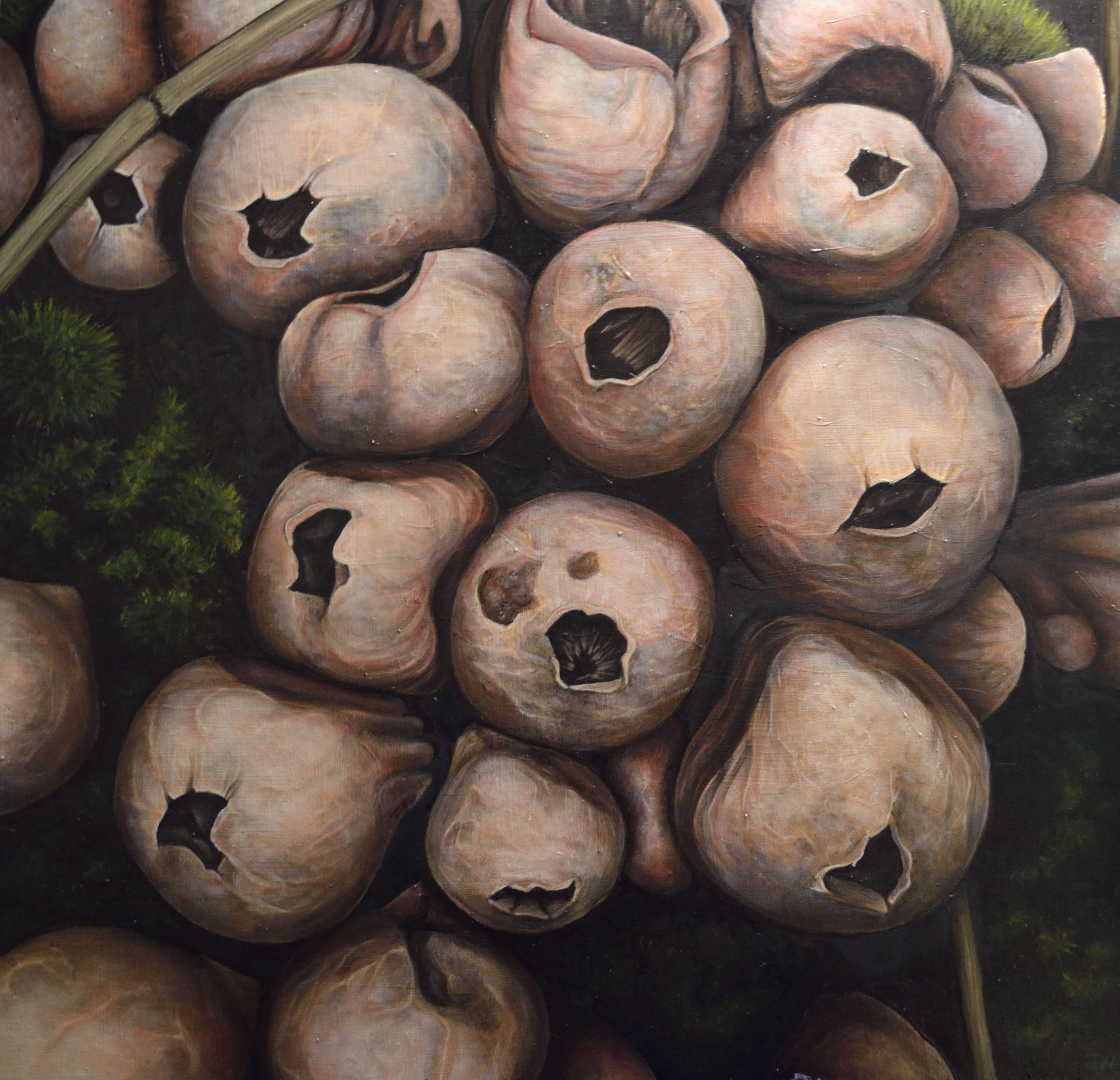 """Puff Ball Mushrooms"" by Devan Horton, 24 x 24in, oil on panel (2017), $800 