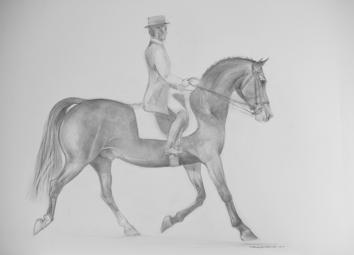 """Dutch Warmblood"" by Monica Barnett, Graphite, 40x30in, 2018, $750.00"