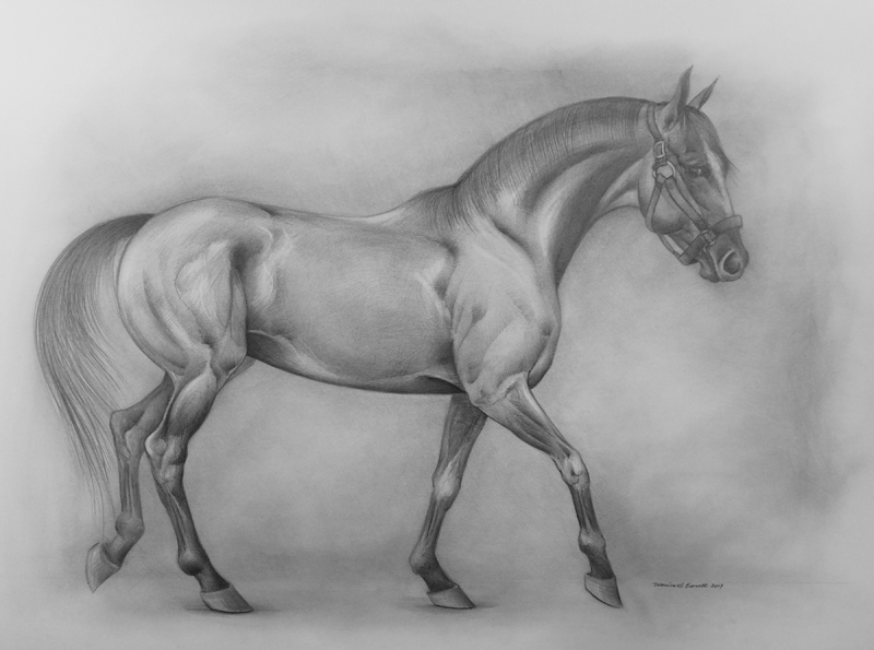 """Thoroughbred Stallion"" by Monica Barnett, Graphite, 40x30in, 2019, $975"
