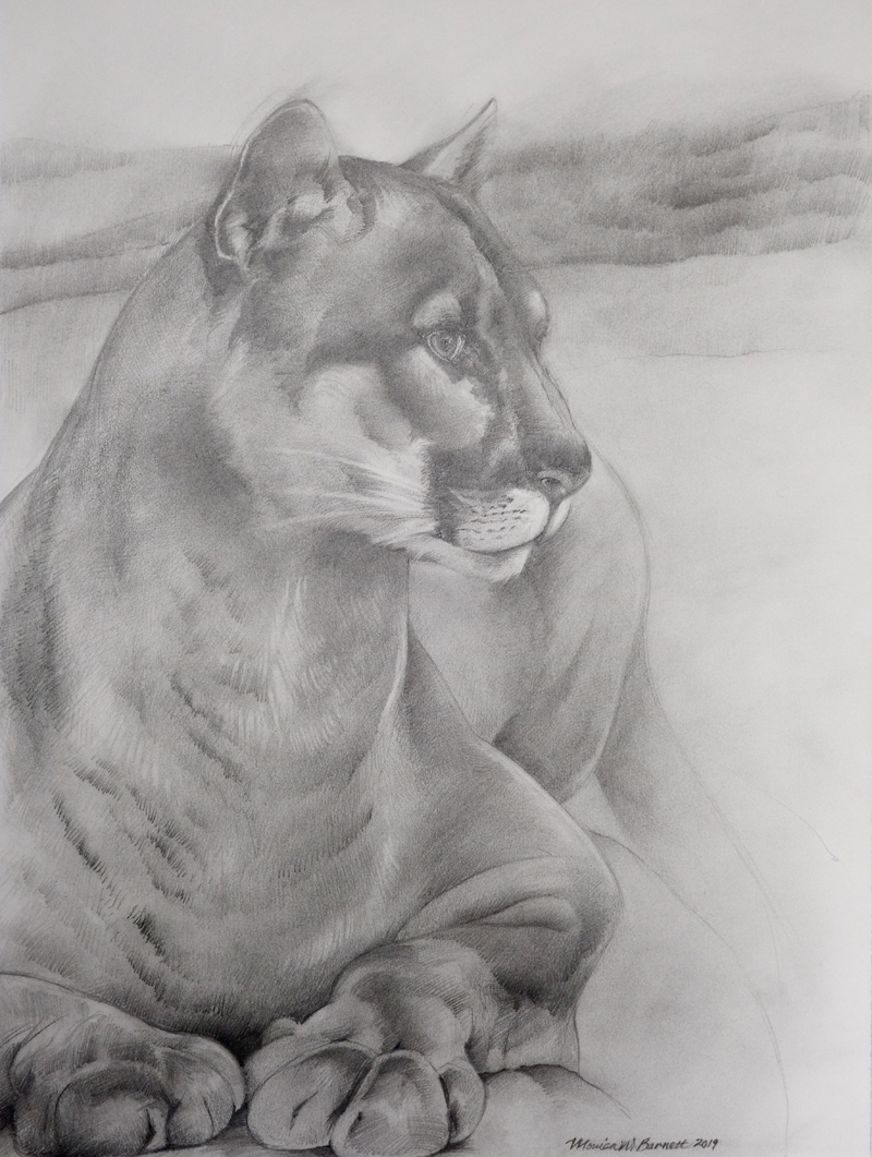 """Cougar Outlook"" by Monica Barnett, Graphite, 24x30in, 2019, $500"