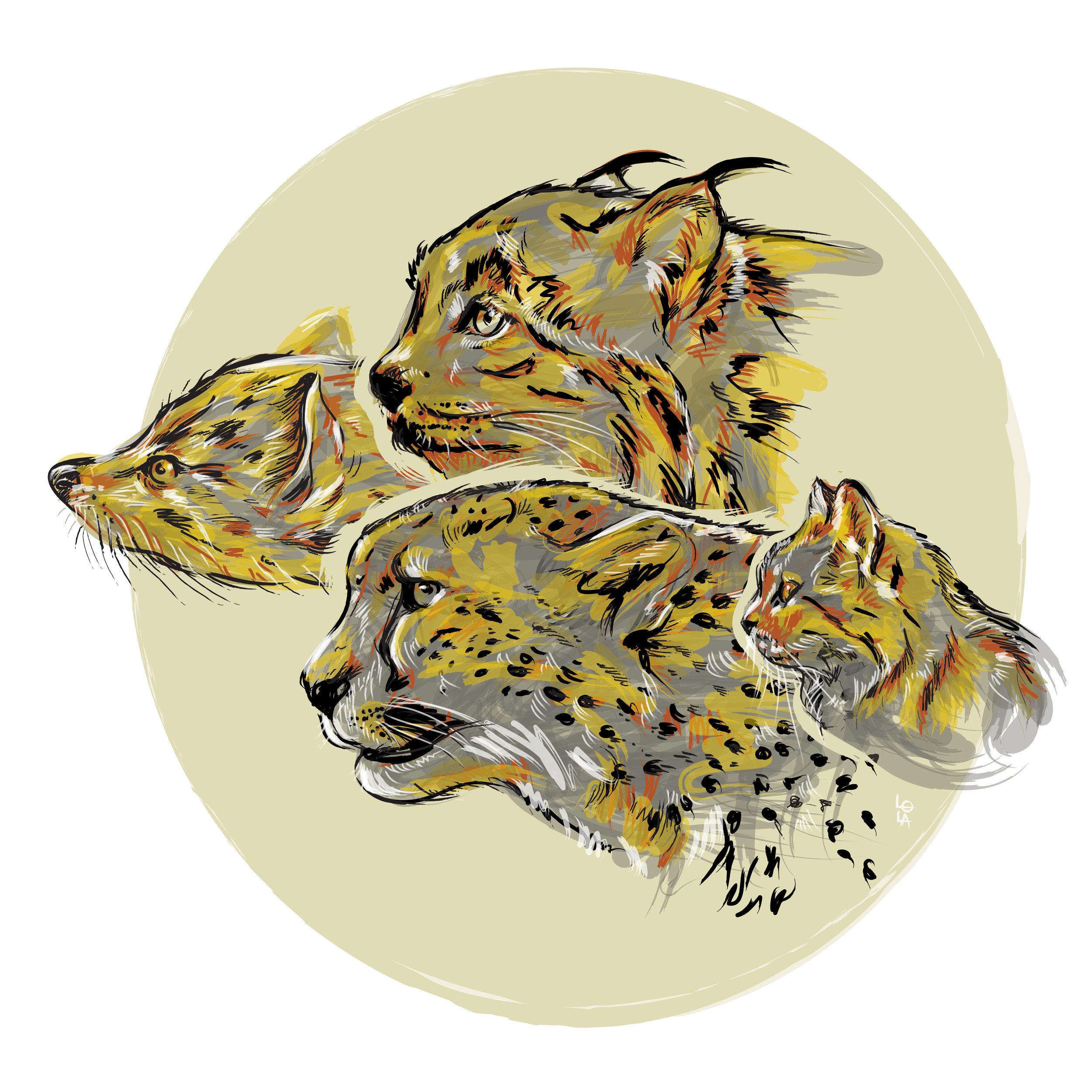 cat-evolution-01-01.jpg