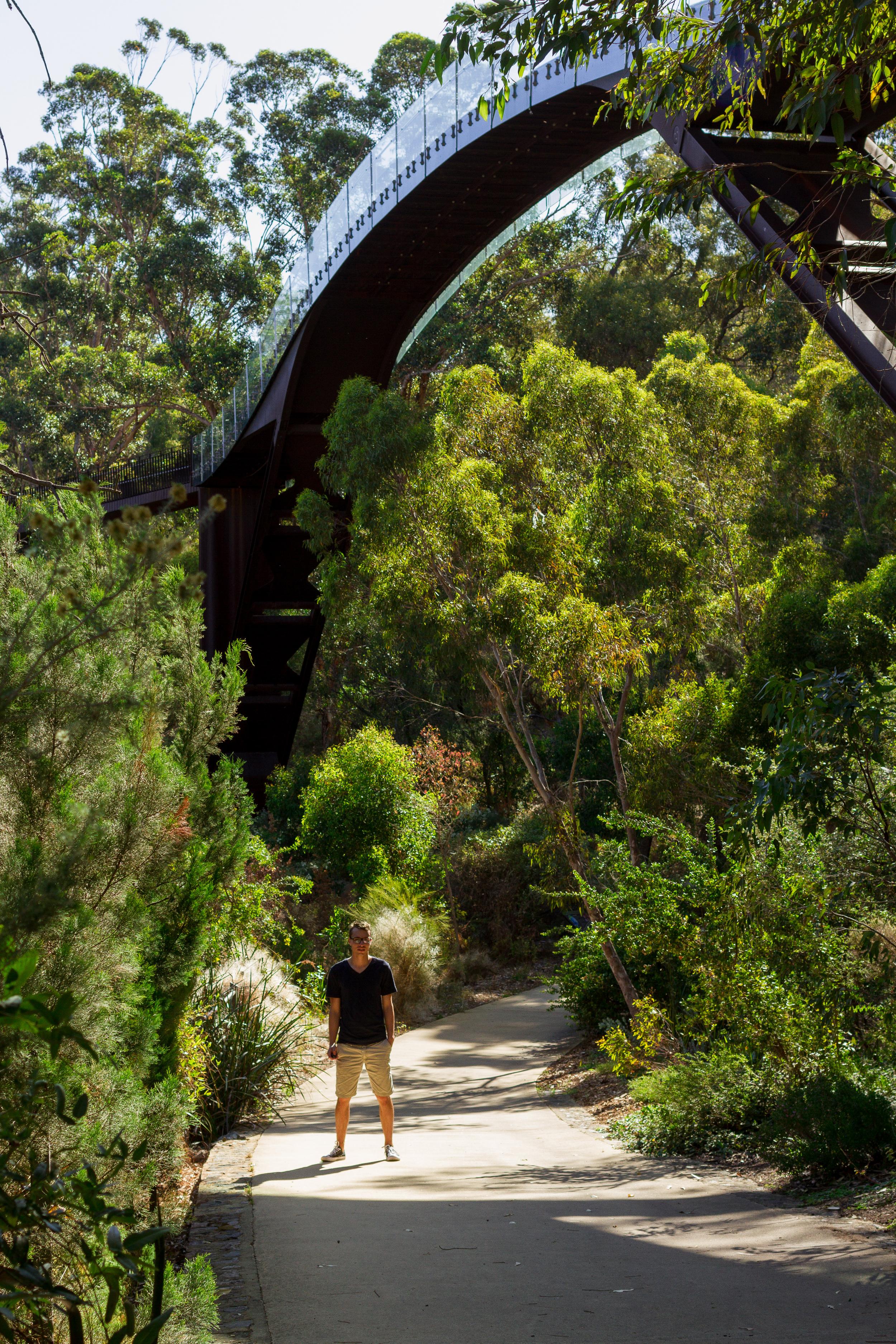 35 mm-20151121-100920-Perth Kings Park.jpg